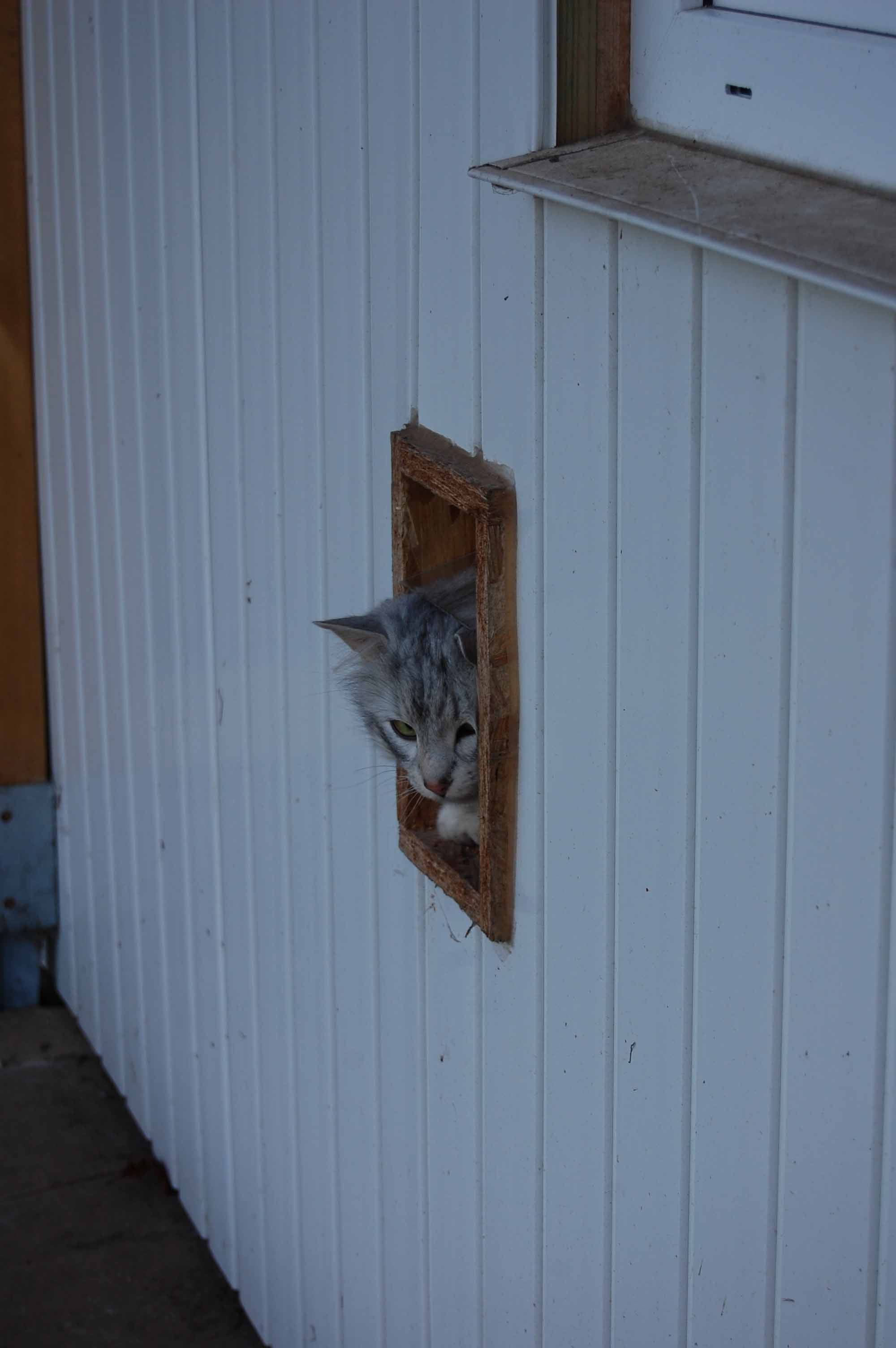 trau ich mich raus ?