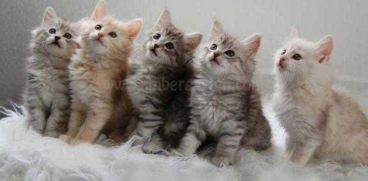 Kittenzimmer