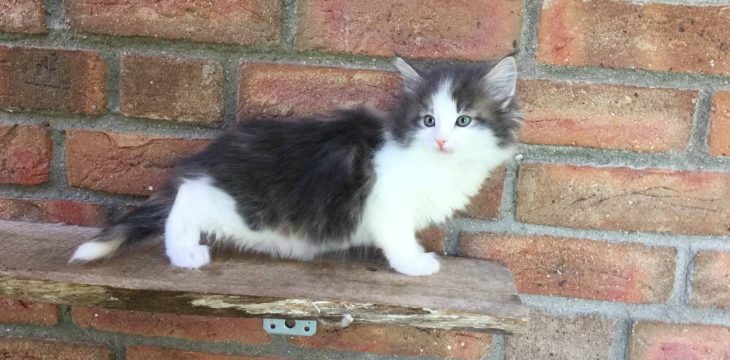 Es gibt neue Bilder von allen Kitten :)