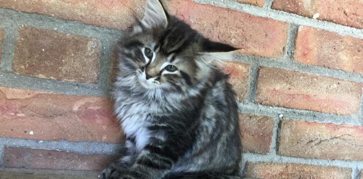 Unsere Kitten sind 8 Wochen alt