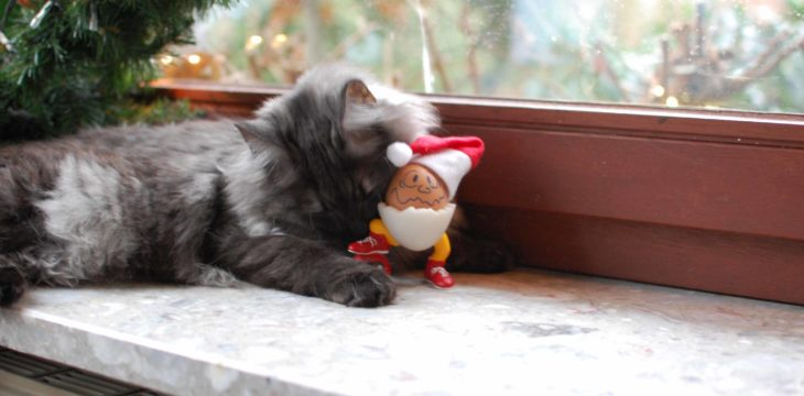 Fröhliche Weihnachten    :)