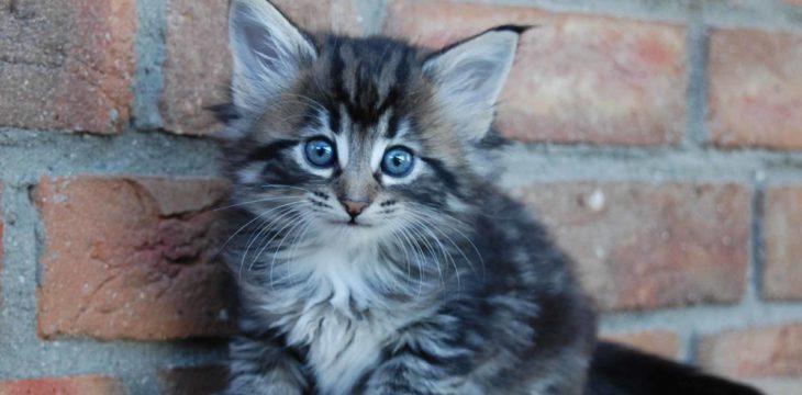 Bilder-Update unserer Kitten